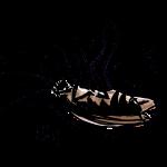 ゴキブリ駆除の方法とコツ?マンションやエアコンの個別対策!
