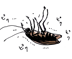 ゴキブリ駆除対策