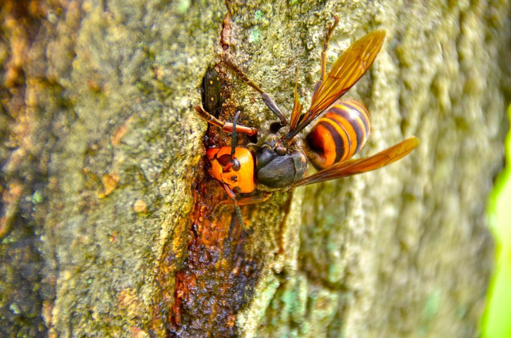 スズメバチの巣の駆除方法