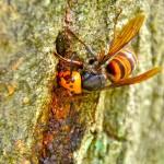 スズメバチの巣の駆除とペットボトルのコツ!家の中に入った時の撃退法と料金は?