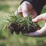 除草剤の安全な使い方!効果が続く日数とネコソギ取る強力なものは?