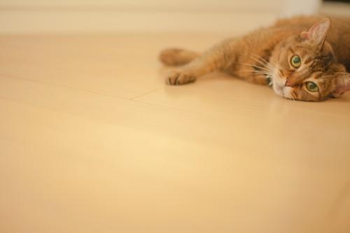 フローリングと床の隙間の掃除方法と予防対策
